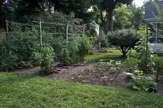 5 garden basics for beginners. Including what zone you live in!  #gardening