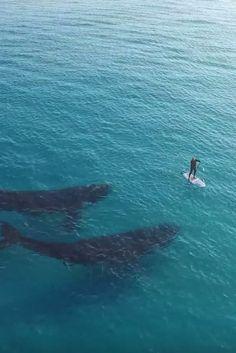 Swimming with giants. (beach fun adventure)