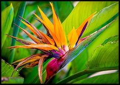 Bird of Paradise Florida Trees, Florida Plants, Flower Quotes, Types Of Plants, Outdoor Plants, Tropical Flowers, Beautiful Birds, More Photos, Trees To Plant