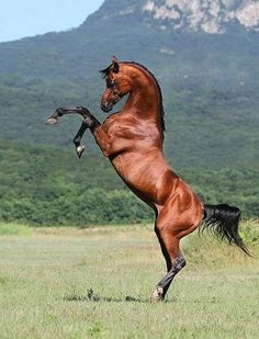 Top 10 der beliebtesten Pferderassen der Welt [No. 7 Awesome] Top 10 Most Popular Horse Breeds in the World [No. 7 Awesome] # … – The Stately Steed – Most Beautiful Horses, Pretty Horses, Horse Love, Horse Photos, Horse Pictures, Animal Pictures, Majestic Horse, Majestic Animals, Beautiful Creatures
