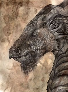 Black dragon head by ~Smocza-wladczyni on deviantART.Though it looks mean, it has a noble look. Plus I love the beard. Magical Creatures, Fantasy Creatures, Fantasy Dragon, Fantasy Art, Dragon Medieval, Medieval Art, Sublime Creature, Dragon Dreaming, Cool Dragons