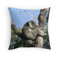 'I'm Sleepy.' Throw Pillow by Debbie Widmer Rest Area, Boarders, How To Find Out, Throw Pillows, Cute, Photography, Design, Toss Pillows, Photograph