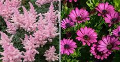 30 Best Flowers for Drying - Gardening Channel Amaranthus, Astilbe, Dried Flower Arrangements, Dried Flowers, Amaranth Flower, Globe Amaranth, Sea Holly, Seed Pods, Yard Landscaping