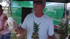 Holidaying on Kauai Hawaii - sharing some Food Fun with Paul & Jude Huber from Kauai Sugarloaf Pineapples, making their Nicecream with white flesh Pinea. Kauai Hawaii, Nice Cream, Pineapple, Women
