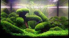 Spiky Moss - Google 検索