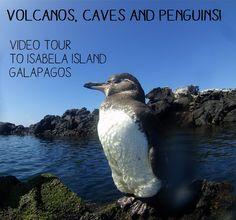 Volcanos, Caves and Penguins on the Galapagos - join me on my trip - on land and under water - to amazing Isabela Island!