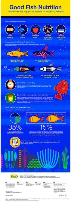 Good Aquarium Fish Nutrition Infographic from Tetra® Brand. Juicy tidbits and nuggets of wisdom for healthier, vital fish. #aquariumtips #aquariumcaretips