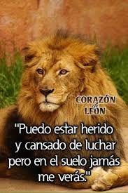 Resultado De Imagen Para Imagenes De Corazon De Leon Con Frases