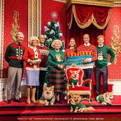 Marcel Le Corgi at Madame Tussauds London. funny royal corgis for Christmas Z