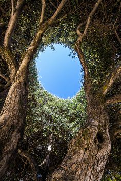 ~~Hole in the Tree Top Beautiful World, Beautiful Places, Tree Tops, Tree Leaves, In The Tree, Flowers Nature, Nature Animals, Science And Nature, Natural Wonders