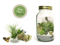 lovely terrarium with airplant