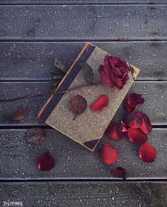 I will not disturb the memory. He fell asleep, let him be silent. But the heart believes in miracle, it hurts me. Vintage Wallpaper, Flower Wallpaper, Nature Wallpaper, Wallpaper Backgrounds, Iphone Wallpaper, Book Photography, Creative Photography, Book Flowers, Beautiful Rose Flowers