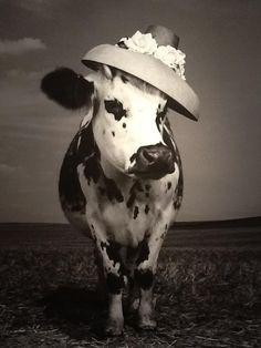Jean-Baptiste Mondino - Oh La Vache!