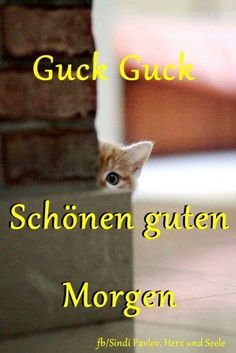 Lustig guten morgen - All For Health Good Morning Funny, Good Morning Good Night, Morning Humor, Diabetes Treatment Guidelines, Diabetic Dog, Morning Greeting, Today Show, Life Is Beautiful, Dog Snacks