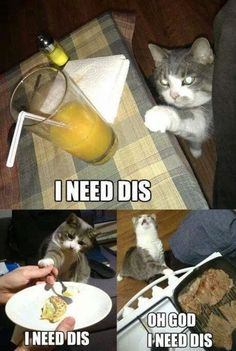38 Struggles Only Cat Owners Will Ever Understand   BlazePress