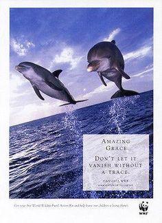 Dolphins Amazing Grace 2000 WWF Animal Protection Ad