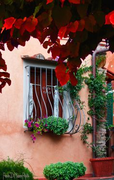 I think Livorno is a city with the sweetest characteristical of window! ♥ Castgneto Carducci - Livorno, Italy