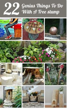 22 Genius Things To Do With A Tree Stump