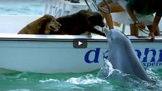 Scene Which Will Expose Your Heart: Dolphin Jumped Out Of The Water And Gave A Kiss To A Curious Dog (VIDEO)
