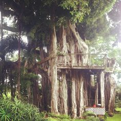 Amazing treehouse in Kona Hawaii