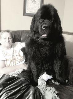 Judge the Newfoundland sitting with Mom