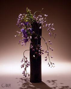 大好きな紫色を基調に、初夏の風が漂う作品に仕上げました。房状につく藤の花を思い切って整理したことで、つるの線がいきます。花材:藤、カンパニュラ 花器:陶器花器(勅使河原宏) The base color of the arrangement is purple, my favorite flower. It tells us that summer is approaching. The neatened wisteria flowers enhance the linear beauty of the vine. Material:Wisteria, Bellflower Container:Ceramic vase #ikebana #sogetsu