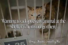 I hate seeing all of those animals in cages. It breaks my heart knowing that they are abused and have no one to love them. If I could, I would totally adopt every single animal in every shelter