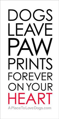 Rover 99 - *Paw Prints | Poster