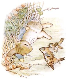 From the book The Tale of Peter Rabbit, written & illustrated by Beatrix Potter