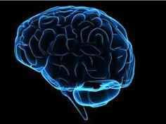 brain structure - Google Search