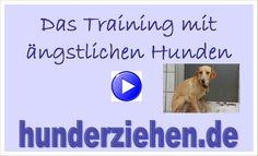 """Das Training mit ängstlichen Hunden Ängstliche Hunde sind gar nicht so selten. Meist sind auch aggressive Hunde nur ängstliche Hunde und wenn man sie versteht und auf vernünftige und nette Art mit ihnen trainiert, schafft man es, wieder Vertrauen aufzubauen und ihnen ein gutes Leben zu ermöglichen.Ängstliche Hunde sind und ich habe mit dem im Seminar gezeigten Weg sehr gute Erfolge und schon so manchen """"unvermittelbaren"""" Tierschutzhund so weit trainieren können, dass er vermittelt werden…"""