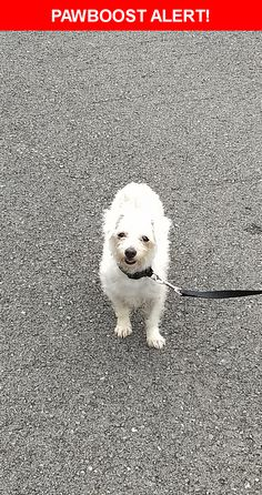 Is this your lost pet? Found in Dalton, GA 30721. Please spread the word so we can find the owner!  White dog about 4 lbs  Cheyenne Trail, Dalton, GA