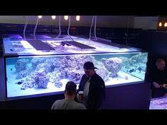 Seahorse Aquarium, Cichlid Aquarium, Marine Aquarium, Reef Aquarium, Saltwater Fish Tanks, Saltwater Aquarium, Aquascaping, Aquarium Setup, Aquarium Ideas