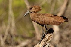 Madagascar, Habitats, Coastal, Bird, Forests, Animals, Birds, Africa, Animales