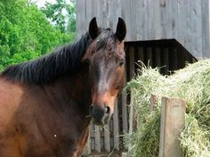 A horse owner asks if hay analysis is necessary. Our nutrition expert offers an answer and advice on getting a sample.