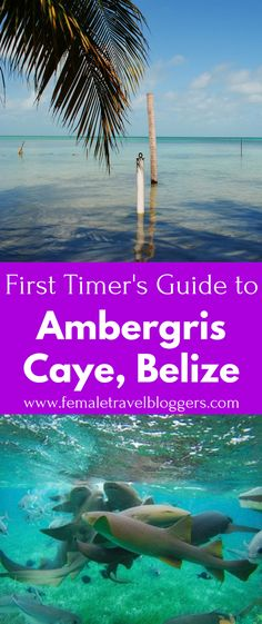 If you're planning a trip to Belize, you have to check out Ambergris Caye in Belize. This beautiful island in Belize has so many fun things to do. It includes places to eat in Ambergris Caye, things to do in Ambergris Caye, places to stay in Ambergris Cay Belize Vacations, Belize Travel, Dream Vacations, Belize Resorts, Vacation Places, Family Vacations, Asia Travel, Family Travel, Honduras