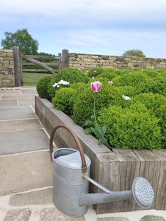 Oak raised beds and Box Ball planting with reclaimed York stone paving
