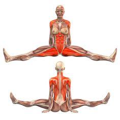 Seated pose, legs wide apart, back straight - Upavishtha Konasana - Yoga Poses | YOGA.com