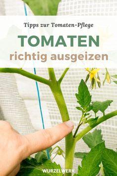 Diy Projects For Beginners, Gardening For Beginners, Gardening Tips, Best Chicken Coop, Vegetable Garden Design, Hydroponic Gardening, Permaculture Garden, Tomato Plants, Real Plants