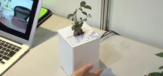 Japanese researchers are developing plants that will wave at you!