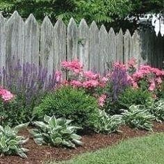 Salvia, pink roses, boxwood, and hostas