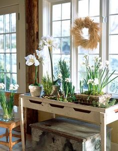 Indoor garden. I like the use of a slightly inset tabletop to hold a collection of attractive pots. So often tables of plants look unsightly and haphazard.