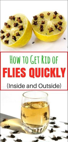 How to Get Rid of Flies Quickly (Inside and Outside) -
