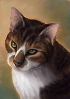 My beautiful kitten, Destin by Nojjesz on DeviantArt