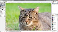 So stellen Sie bei GIMP Objekte mit der magnetische Schere frei.