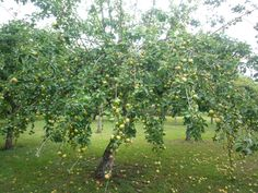 The orchard at Les Amandiers, Villamblard. France. Available to rent through ownersdirect.com