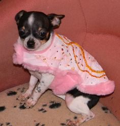 Manteau chihuahua, petit chien, doudoune chihuahua, fait main : Animaux par abby-toutous Boston Terrier, Dogs, Etsy, Chihuahua Clothes, Petite Clothes, Smallest Dog, Doggies, Animaux, Handmade