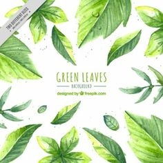 Hand painted green leaves background