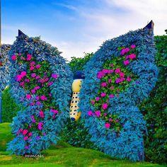 Great Pic Butterfly Garden dubai Concepts A butterfly garden is not a more techn. Great Pic Butterfly Garden dubai Concepts A butterfly garden is not a more technical than any garden together with easy . Unique Gardens, Amazing Gardens, Beautiful Gardens, Beautiful Flowers, Topiary Garden, Indoor Garden, Garden Art, Miracle Garden, Grass Flower