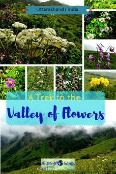 Valley of flowers I Uttarakhand | India | A Trek to the Valley of Flowers